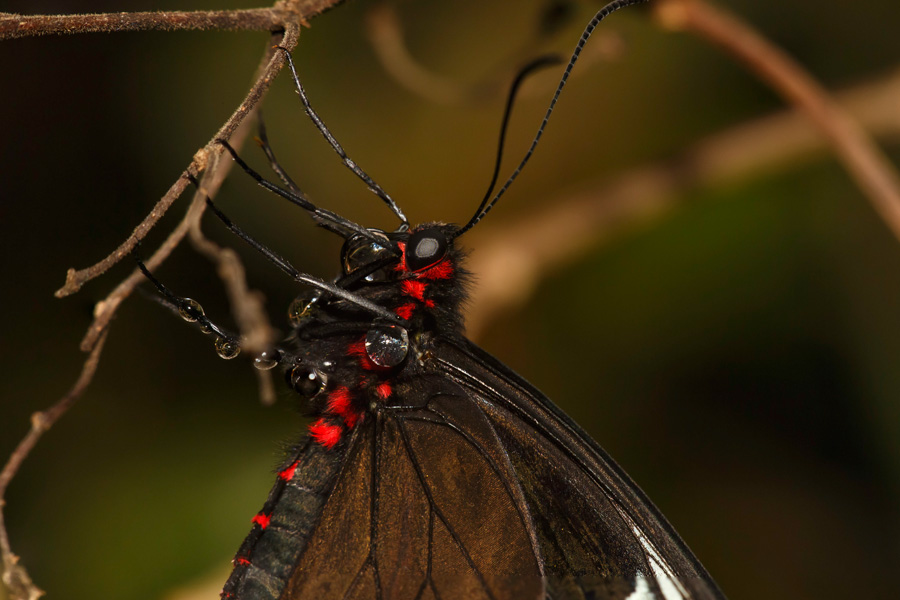 Vlinder10