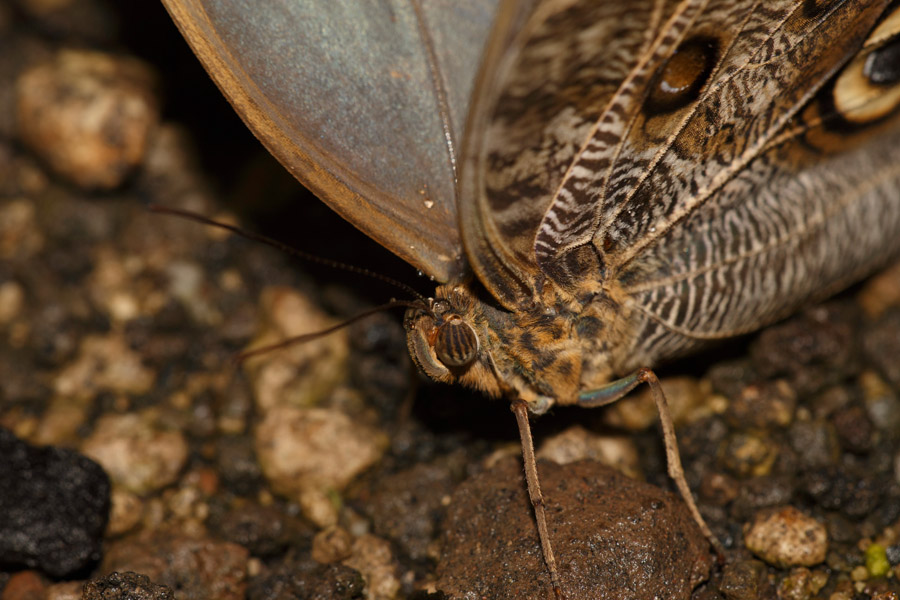 Vlinder4