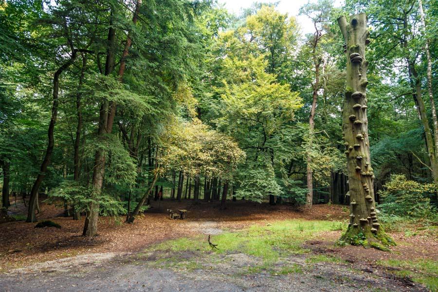 Hellendoorn, Steenhaarweg