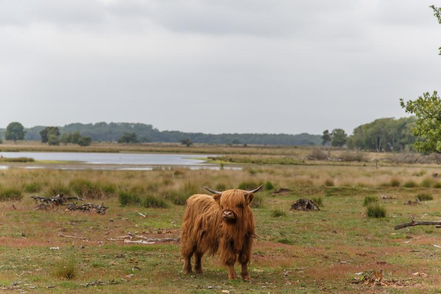 Heide, Someren